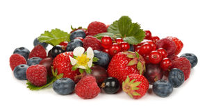 Various berries Stock Photography