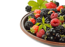 Various berries Stock Image