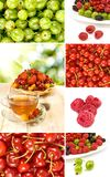 Various berries on a white background Royalty Free Stock Image