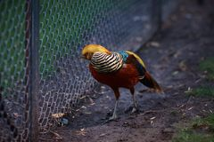 Bird in a zoo royalty free stock photography