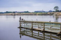 Various bird species resting on a wooden ledge in Shoreline Park, Mountain View, California stock photography