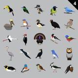 Various Birds Cartoon Vector Illustration 4 Stock Photography