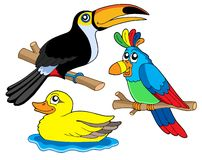 Various birds collection 01 Royalty Free Stock Image