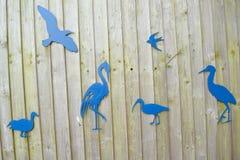 Various birds Royalty Free Stock Photos