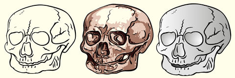 Various bizarre human skulls Royalty Free Stock Photos