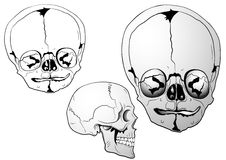 Various bizarre skulls Stock Photo