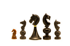 Various Black horse chess  pieces isolated on white background Royalty Free Stock Image