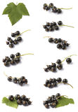Various blackcurrant Royalty Free Stock Image