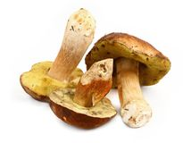 Various boletus mushrooms. Three various boletus mushrooms on white background, minimal natural shadow under Royalty Free Stock Images