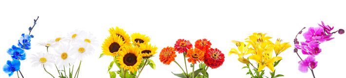 Various bouquet of flowers isolated on white background Royalty Free Stock Photos