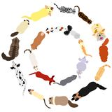 Cats and dogs round frame set. Various breeds of cats and dogs circle set from high angle view on white royalty free illustration