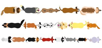 Dogs breed top view border set. Various breeds of dogs border set from high angle view on white vector illustration