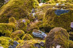 Boulders close up, stacked. Various brown and mottled boulders close up, stacked, some of them overgrown with moss and grass royalty free stock image