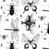 Various bugs in the pattern Stock Image