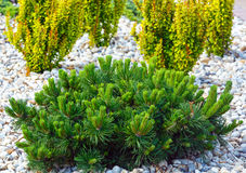 Various bushes on flowerbed Stock Photos