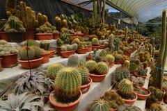 Various cacti Stock Photography