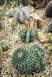 Various cacti Stock Photos