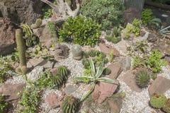 Various cacti plants Stock Photos