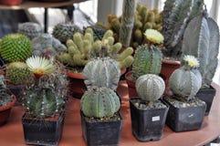 Various cacti Stock Image