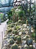 Various cactus in a glass greenhouse for protection in The Conservatory and Botanical Garden stock image
