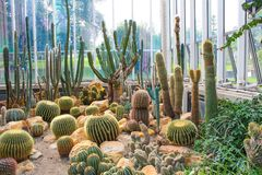 Various cactus in a glass greenhouse for protection royalty free stock image