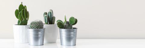 Various cactus house plants in different pots against white wall. Banner with copy space. Modern room decoration. Various cactus house plants in different pots royalty free stock photos