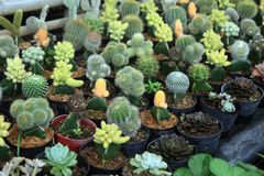 Various of cactus Stock Images