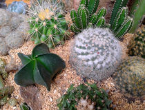 Various cactus plants Stock Images