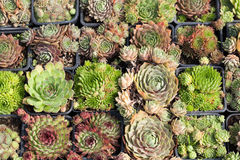 Various cactus plants Stock Photo