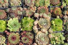 Various cactus plants Stock Photo