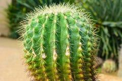 Various cactus plants, selective focus Stock Photography