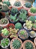 Various cactus plants Royalty Free Stock Photo