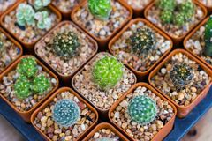 Various cactus plants. / Group of small cactus in the pot Royalty Free Stock Images