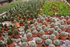 Various Cactus in the pot in Cameron Highland Malaysia Stock Photos