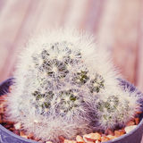 Various of cactus Royalty Free Stock Images