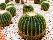 Various cactus species Stock Photo