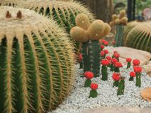 The various cactus trees in the stone garden royalty free stock photography