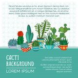 Vector cacti background. Stock Photography