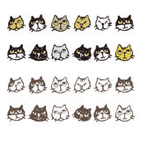 Various cat's face expression Royalty Free Stock Image