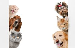 Various cats and dogs as frame isolated on white. Dogs cats various copy space white background colorful royalty free stock images