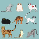 Various cats Stock Photos