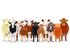 Various cattle group. Large group of various breeds cattle standing on white background royalty free illustration