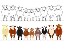 Various cattle in a row. Set of with and without colors on white stock illustration