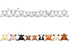 Various cattle in a row. Upper body and front legs, set of with and without colors on white stock illustration