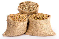 Various cereal grain. Wheat, rye and barley in small burlap sacks Royalty Free Stock Image