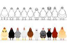 Various chicken in a row. Border Set of various breeds of chicken in a row on white royalty free illustration