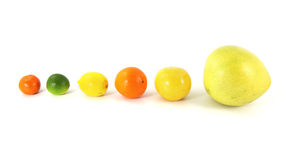 Various citrus fruit. Various ripe citrus fruit isolated on white background in line Stock Photo