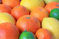 Various citrus fruits Royalty Free Stock Photography