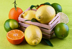 Various Citrus Fruits Stock Photography