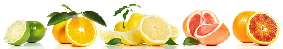 Various Citrus Fruits Panorama stock photography
